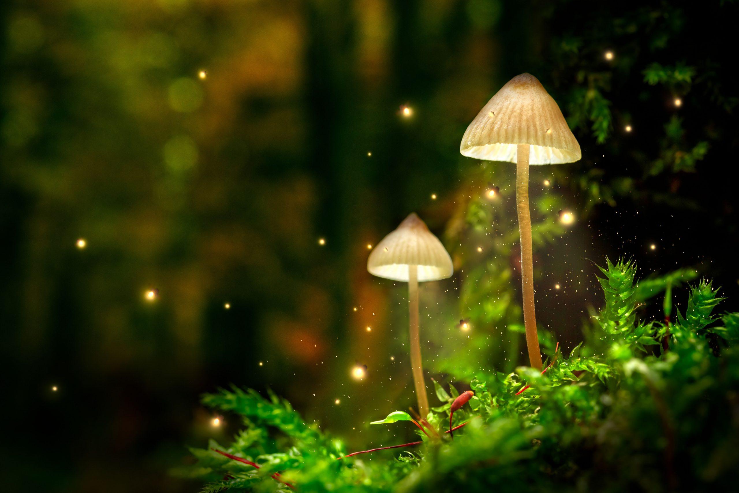 Bioluminiscența: Lumina vie